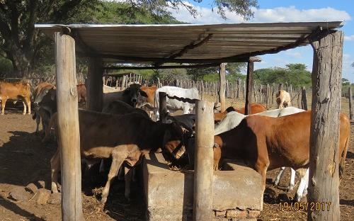Beef production in Chikomba